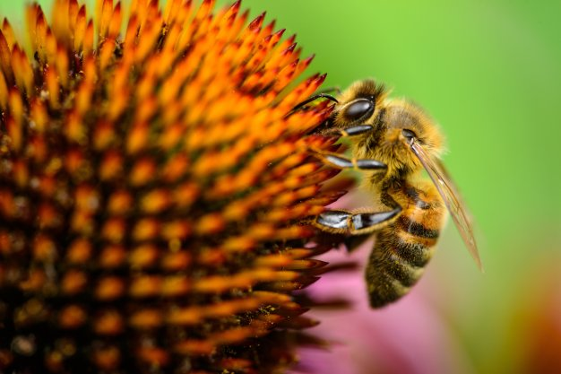 bees-bee-flower-unsplash