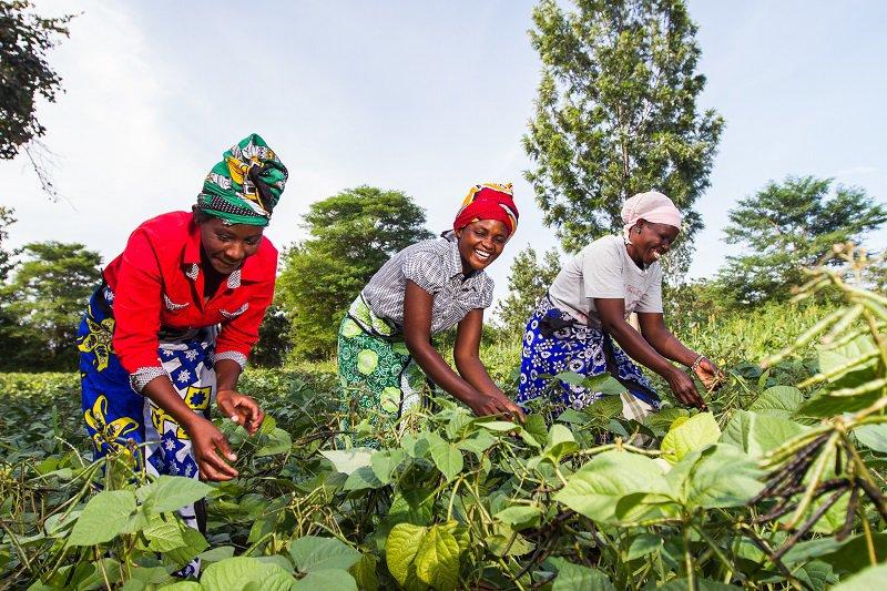 Farm Africa - women in Kitui, Kenya, farming Sorghum.jpg