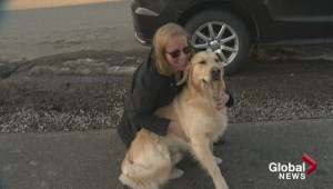 Emotional day for Kelowna family reunited with stolen dog