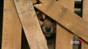 Canadians help to end dog meat farming in South Korea