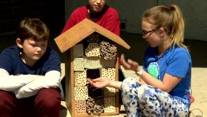 Calgary kids abuzz with excitement at Alberta's first Bee School