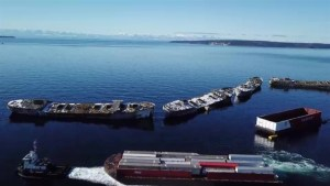 Old barge creates new artificial reef off B.C. coast