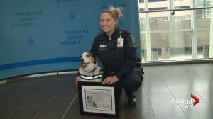 Rusty the detector dog retires after 10 years with Canada border services