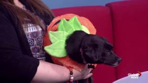 Halloween social supporting K9 advocates