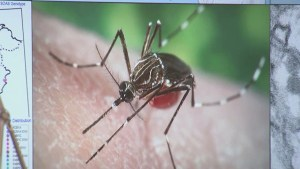 Experts warning of fast-moving Zika virus