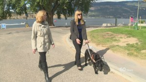 Kelowna CNIB celebrates National Service Dog Month
