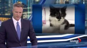 Kitten found alive inside zipped shaving bag in trash