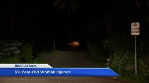 Maple Ridge woman in hospital after violent encounter with bear (01:40)