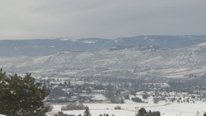 Cougars caught on camera in the north Okanagan