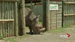 Last northern white rhino male dies in Kenya