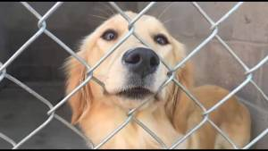 20 new rescue dogs now up for adoption at Peterborough Humane Society (00:46)