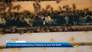 Sustaining the bee population