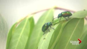Southern Alberta kids take advantage of Insect Discovery Day
