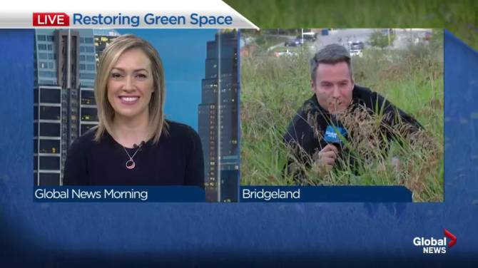 Noticing that long grass? It could be a City of Calgary habitat restoration