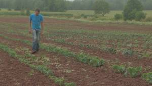 Nova Scotia farmers welcome rain after struggling with dry conditions (02:03)