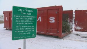 A win for the environment: How to recycle your Christmas tree in Regina