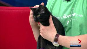 Pet of the Week: Spark