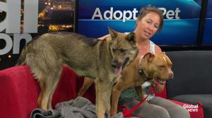 Dogs from Second Chance Animal Rescue Society look for forever homes
