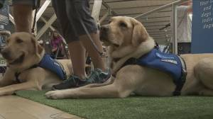 Meet the working dogs of YVR