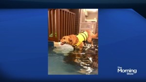 Does your dog need swimming lessons?