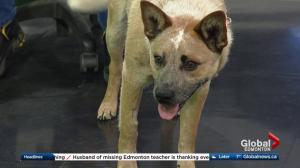 Edmonton Humane Society: Tawny & Dasher