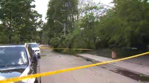 Powerful storm rushes through GTA bringing down tree branches, power lines