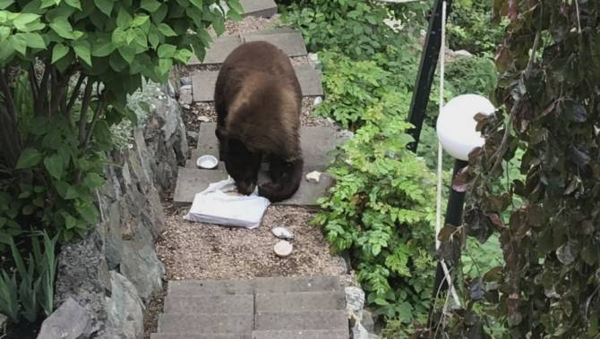 B.C. wildlife dine and dash: Bear surprises homeowner, scarfs down food, then leaves