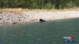 Bear and dog encounter highlights importance of keeping pets on-leash