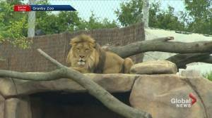 What's new at the Granby Zoo