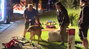Calgary firefighters rescue senior and dog from ravine