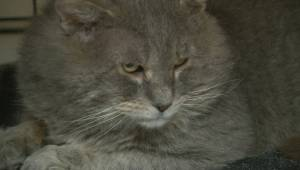 'Stowaway Cat' goes on wild ride across Canada