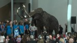 Mammoth unveiled in Royal Alberta Museum lobby