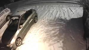 Alaska earthquake rattles cars, spooks animals