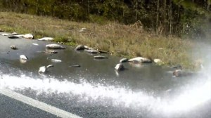 Fire department in North Carolina spray off dead fish left behind by Florence flooding