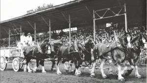 Peterborough Ex opens for its 176th edition