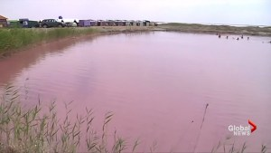 Pink lake in Ukraine attracts visitors with beauty, therapeutic reasons