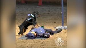 Video appears to show Madrid police dog give CPR