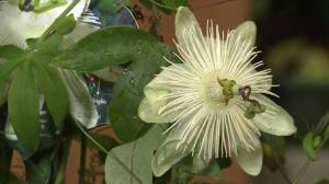 GardenWorks: How to get your patio garden to provide some privacy