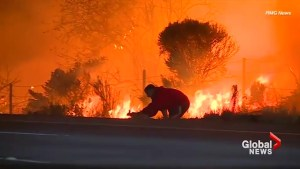 Driver pulls over to save rabbit from the approaching wildfire in California