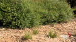 Bio-what? Bioswales used at University of Lethbridge to help filter storm water runoff