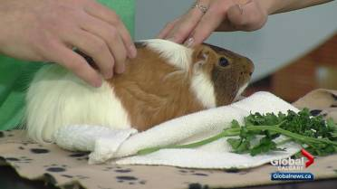 Calgary Humane Society issues plea for public help after
