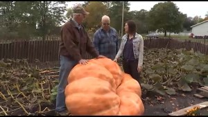 CHEX Daily learns the secret to growing giant pumpkins