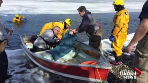 Dog plucked from icy Osoyoos Lake