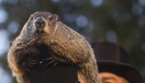 Fun facts about the tradition and history of Groundhog Day