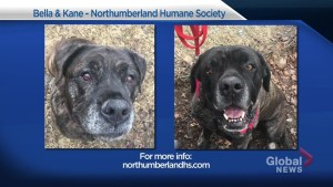 Global Peterborough's Shelter Pet Project – Bella and Kane