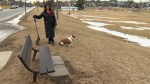 Scarborough resident frustrated by piles of dog waste