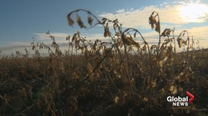 Dry, windy weather forces Wheatland County to issue fire ban