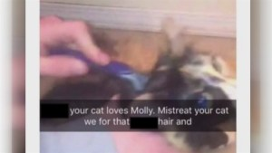 More postings of animal abuse on social media