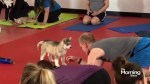 The latest trend in yoga…puppies