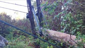 Chainsaw used to cut three hydro poles in Coquitlam park